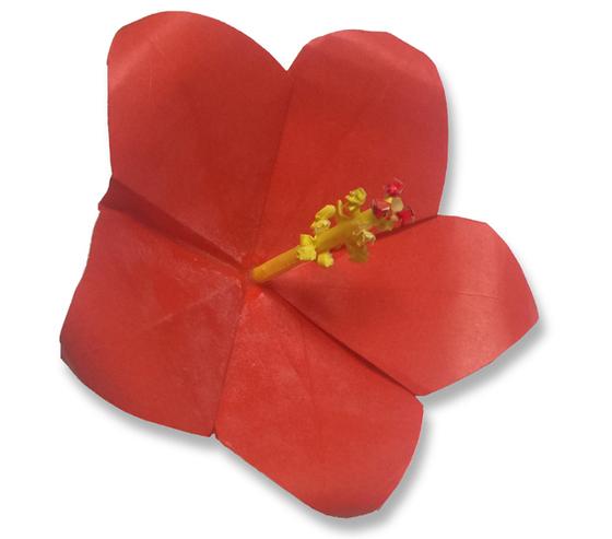 おりがみくらぶ(新宮文明)さんによるはいびすかすの折り紙